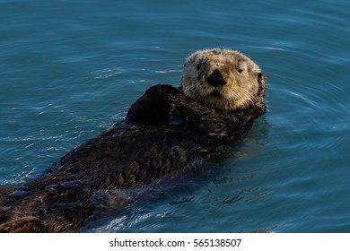 Sea otter checking out visiting tourists