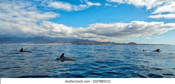 Sea panorama landscape with the short-finned pilot whales