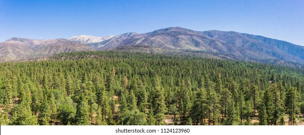 Sea of pine trees at the base of the mountains in the San Bernadino National Forest of California.
