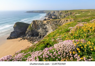 Sea Pink or thrift covered cliffs above the famous Bedruthan Steps beach on the Atlantic coast of North Cornwall, UK