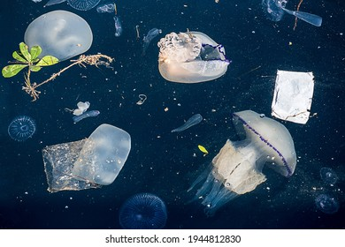 sea pollution concept with rhyzostoma jellyfish floating