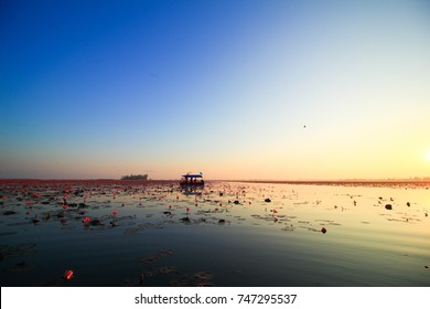 The sea of red lotus, blossom red lotus in morning, Lake Nong Harn, Udon Thani, Thailand