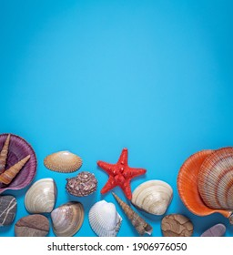 sea shells, red starfish, pebbles on a blue background, the concept of a summer vacation, travel on the sea coast,