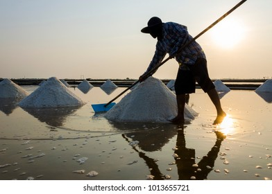 Sea salt process made from pile of salt in the salt pan by salt worker at rural area of Thailand,Samut Songkhram,Samut Sakhorn