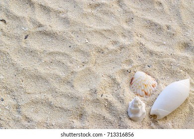 Sea sand snails, Background