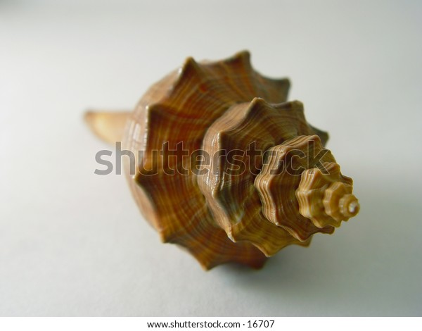 A sea shell.