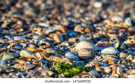 sea shell background, travel Norderney germany