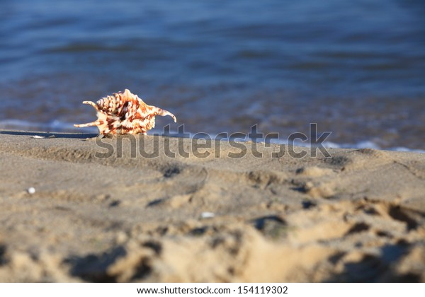 sea shell in the beach sand at ocean background. Summer vacation symbol