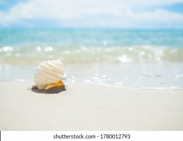 Sea shell conch on sand beach with blur image of blue sea and blue sky background. sunshine on sea with bokeh. tourist ocean pattaya thailand. for travel summer holidays.