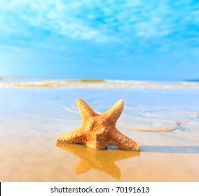 Sea Shell Dream