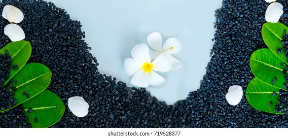 Sea shell and frangipani flowers on stone small black,Suitable for background about of spa and wellness care,Background for summer holiday relax copy space,Soft focus and blurred