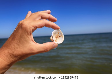 Sea shell in hand against the backdrop of the sea on a sunny summer day