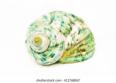The sea shell isolated on white background and clipping part