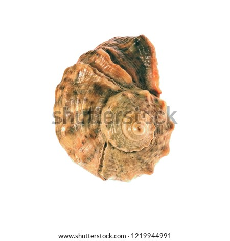 sea-shell-isolated-on-white-450w-1219944
