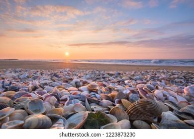 A sea of shell, in Jesolo Beach, Venice, Italy