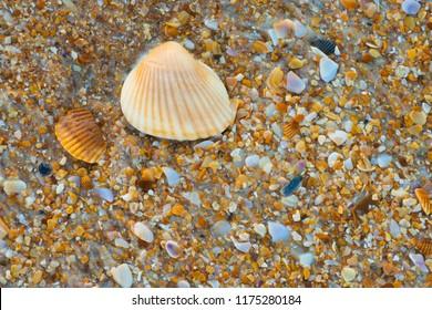 Sea shell macro florida ocean beach close up textured background
