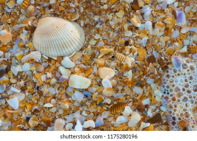 Sea shell macro florida ocean beach close up textured background