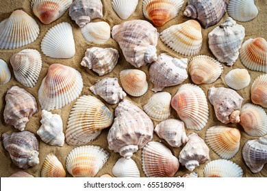 Sea shell on the sea beach. Summer rest.