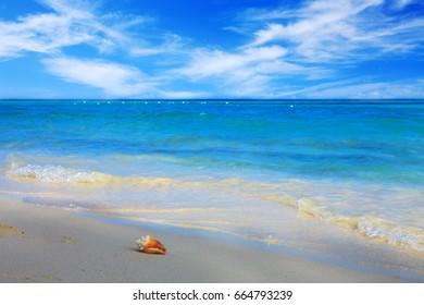 Sea shell on Caribbean beach.
