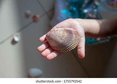 Sea shell on an opened little girl's palm