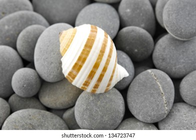Sea Shell on pebbles background