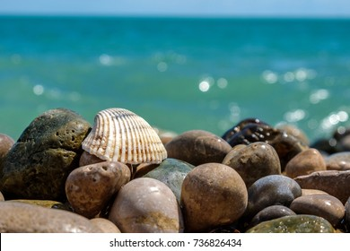 sea shell on rocks at the sea's pebble beach, the Black sea and blue sky