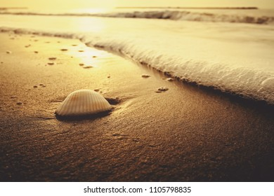 sea shell on the sandy beach at sunset