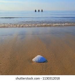 Sea shell on a sandy beach near near town of Lyme Regis in Dorset on the Jurassic Coast