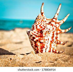 Sea Shell on sandy beach/Summer vacation background with shell