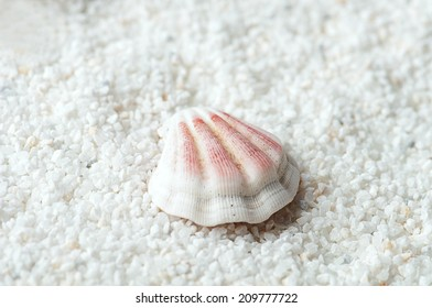 Sea shell on the white sand