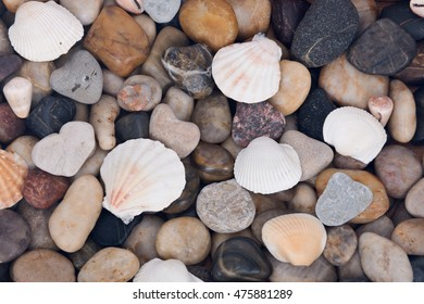 Sea shell and pebble stone colorful background