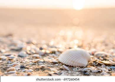 sea shell placed on sand and shells relics with a sea view  in the sunrise