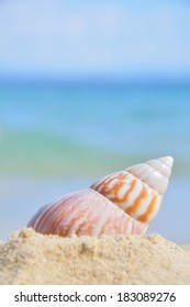 Sea shell in the shallow sandy beach waters, sea waves rolling in the distance, shallow depth of field
