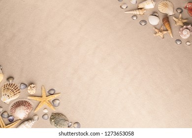 sea shell and starfish background. Shells and star fish on beach sand