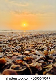 Sea shell Sunset