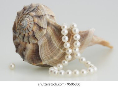 sea shell white pearls necklace elegant beautiful