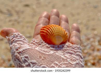 Sea shell in a woman's hand.Ashdod beach 13.03.2021