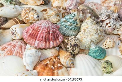 Sea shells arranged on isolating white background