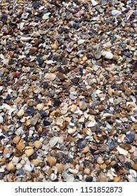 Sea shells background - Shutterstock ID 1151852873