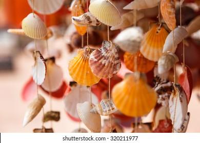 Sea shells close up in Santa Maria beach in Cape Verde