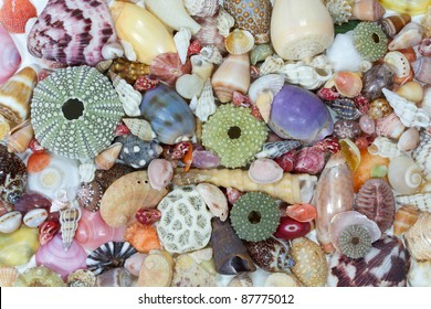 Sea shells collected on the coast of Costa Rica as background