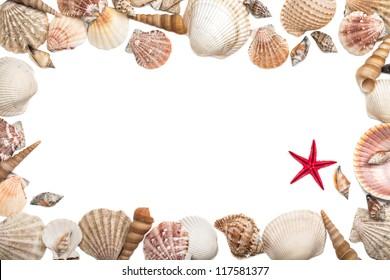 Sea shells frame on white background
