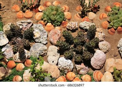 Sea shells and garden plants