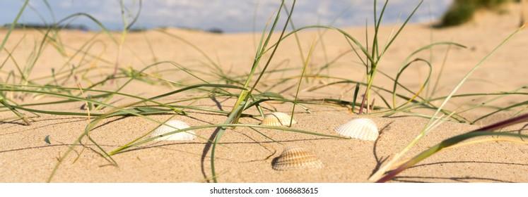 Sea shells and  grass at Wells next the Sea beach, North Norfolk, UK