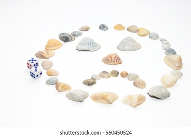 Sea Shells Isolated on the white background