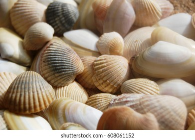 Sea shells macro background