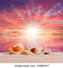 Sea shells on the beach and beautiful sunset over a tropical sea.