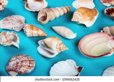 sea shells on a blue background. Pastel tones