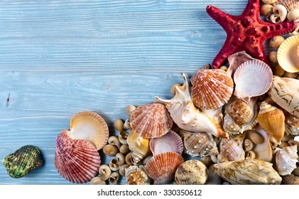 Sea shells on a old wooden table