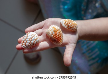 Sea shells on an opened child's palm
